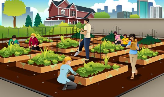 The real value of urban farming. (Hint: It's not always the food.)