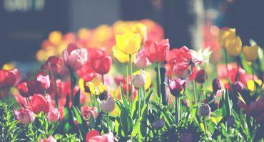 Kwiatowy Ogród w Domu Kultury